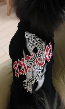 2010わんこ服1-1.JPG