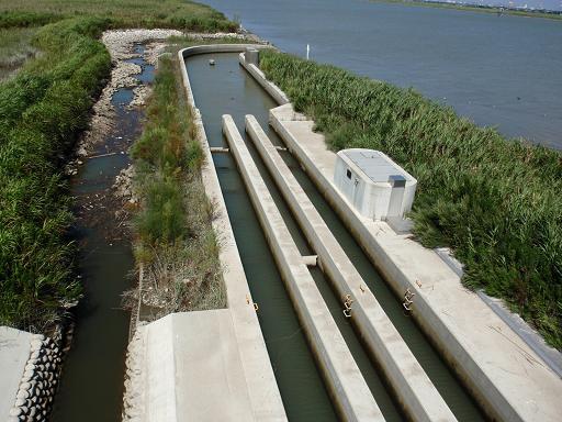 利根川河口堰の魚道
