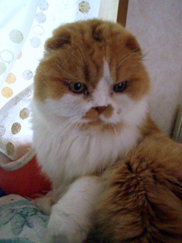 ちゃちゃまる 猫ベッドでねんね
