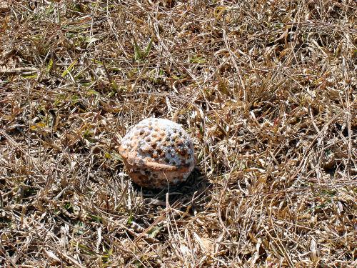ボール爆弾2.jpg