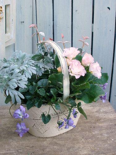バラ咲きジュリアンとニオイスミレの寄せ植え