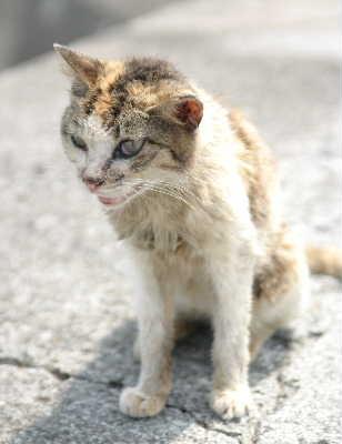 初島の猫の参考写真(2006年8月).jpg