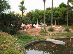 furamingo