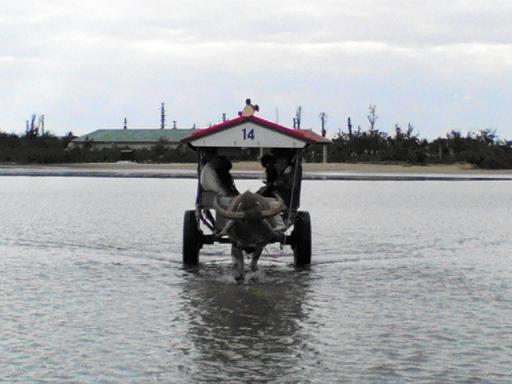 水牛車(4)