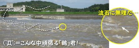 h21.08吉井川の濁流