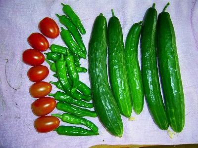 7月15日の収穫