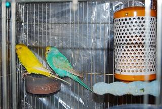 鳥のストーブ