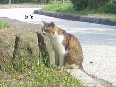 ネコちゃん.jpg