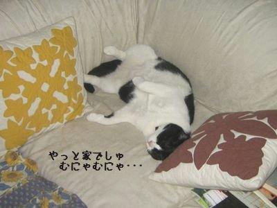 お疲れちび太.jpg