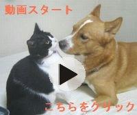 動画用.jpg