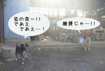 田舎の犬.jpg