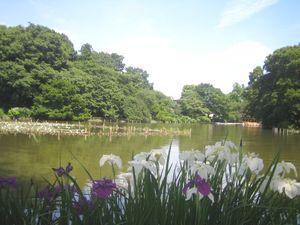 善福寺公園下池.jpg