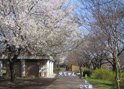 勘違い桜.jpg