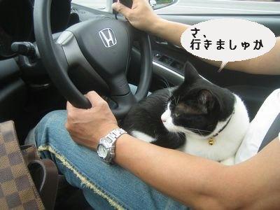 運転席.jpg
