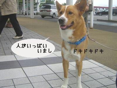海老名こち蔵.jpg