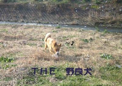 こあゆ川.jpg