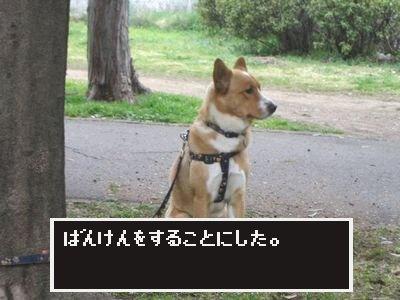 番犬.jpg