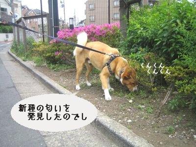 くんくん.jpg