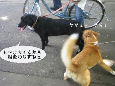 ソラちゃん.jpg