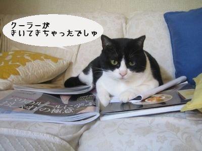 ちび太ON雑誌.jpg