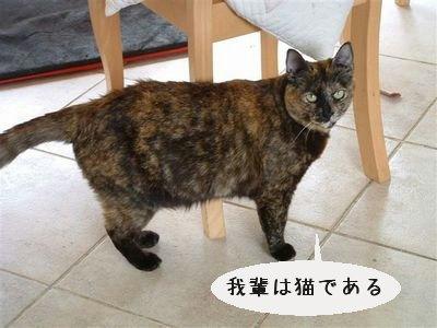 我輩は猫である.jpg