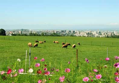 Booska北海道'05 05羊ヶ丘公園5