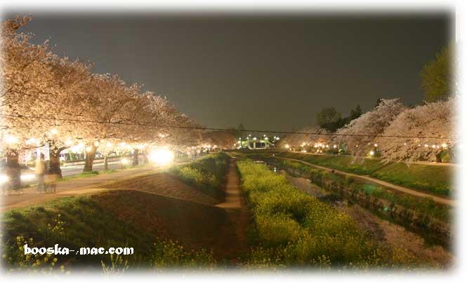 '04佐奈川桜1