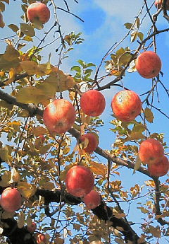 マルタリンゴ