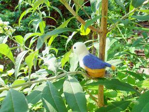 くるみ鳥1・小.JPG