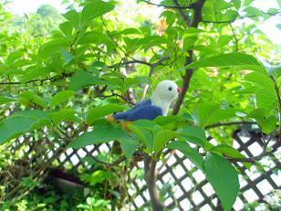 くるみ鳥4・小.JPG