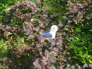 くるみ鳥5・小.JPG