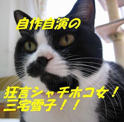 シャチホコ三宅雪子!!