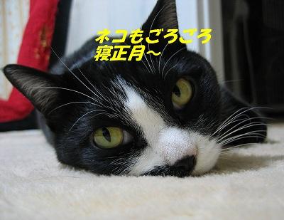 ネコもごろごろ~