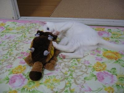 容疑者に似た白い猫