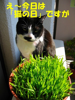今日は猫の日ですが