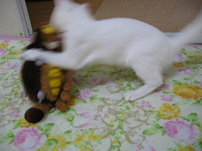 襲い掛かる白猫