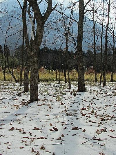 大分の雪景色