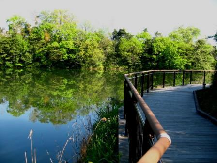 三兼池公園 遊歩道