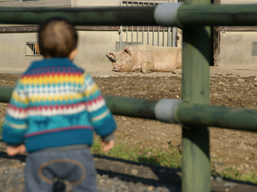 畜産センター(20111124)2