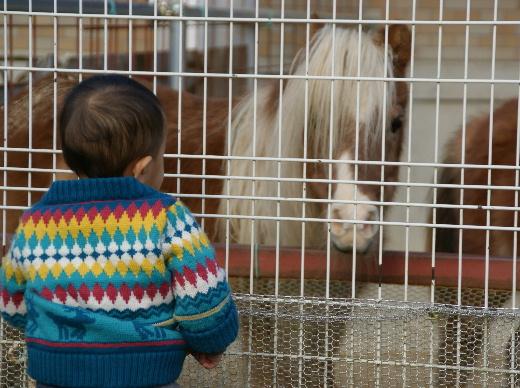 畜産センター(20111124)3