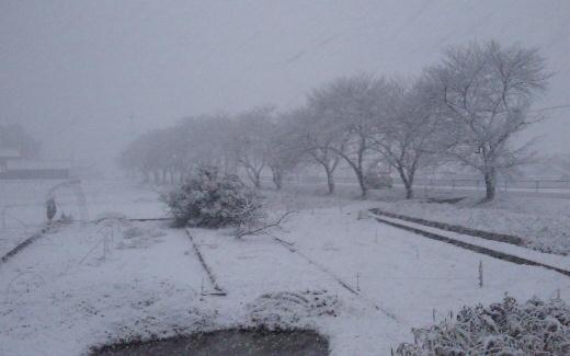 大雪(20120201)2