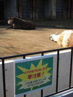 上野動物園3