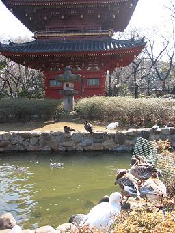 上野動物園8