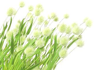 green_4_c