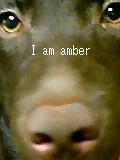 amber2