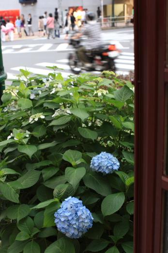 6月1日渋谷