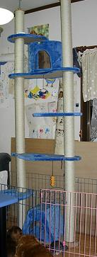 060802cattower.JPG