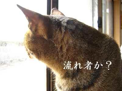oshigoto4.jpg