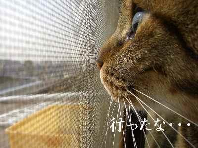 oshigoto5.jpg