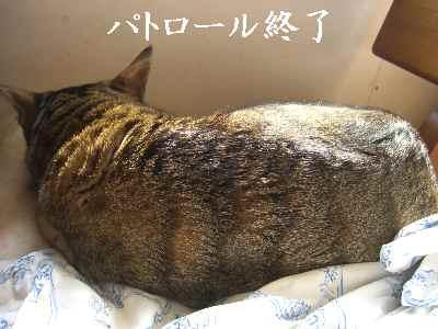 oshigoto6.jpg
